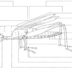 External Grasshopper Diagram Wiring 3 Lights 2 Switches Anatomy 1 Quizlet Location