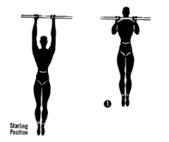 IMPORTANT MUSCLE TERMINOLOGY Contractions, Agonist