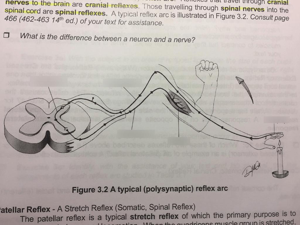 hight resolution of location term motor neuron