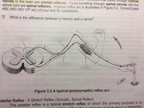 small resolution of location term motor neuron