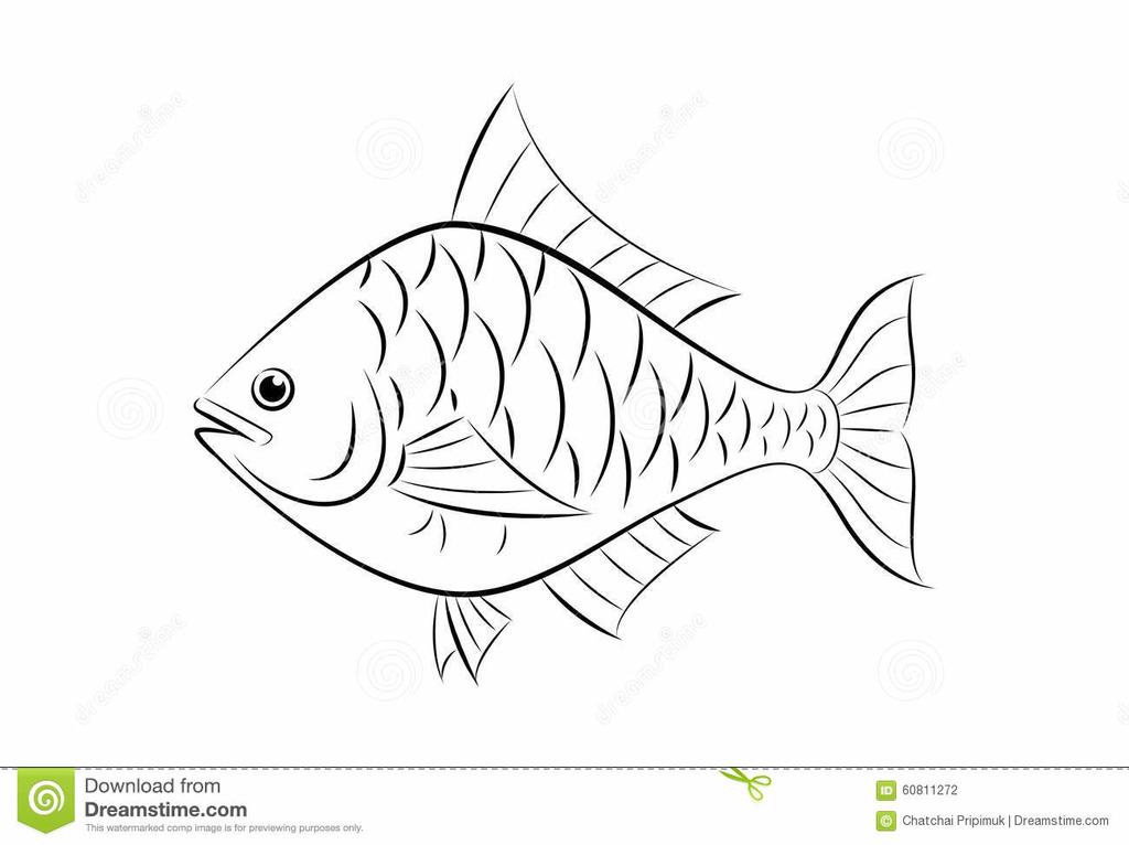 Fish Fin Diagram