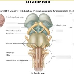 Reticular Formation Diagram Deer Butcher Brain Stem 5 11 Kenmo Lp De Brainstem Quizlet Rh Com