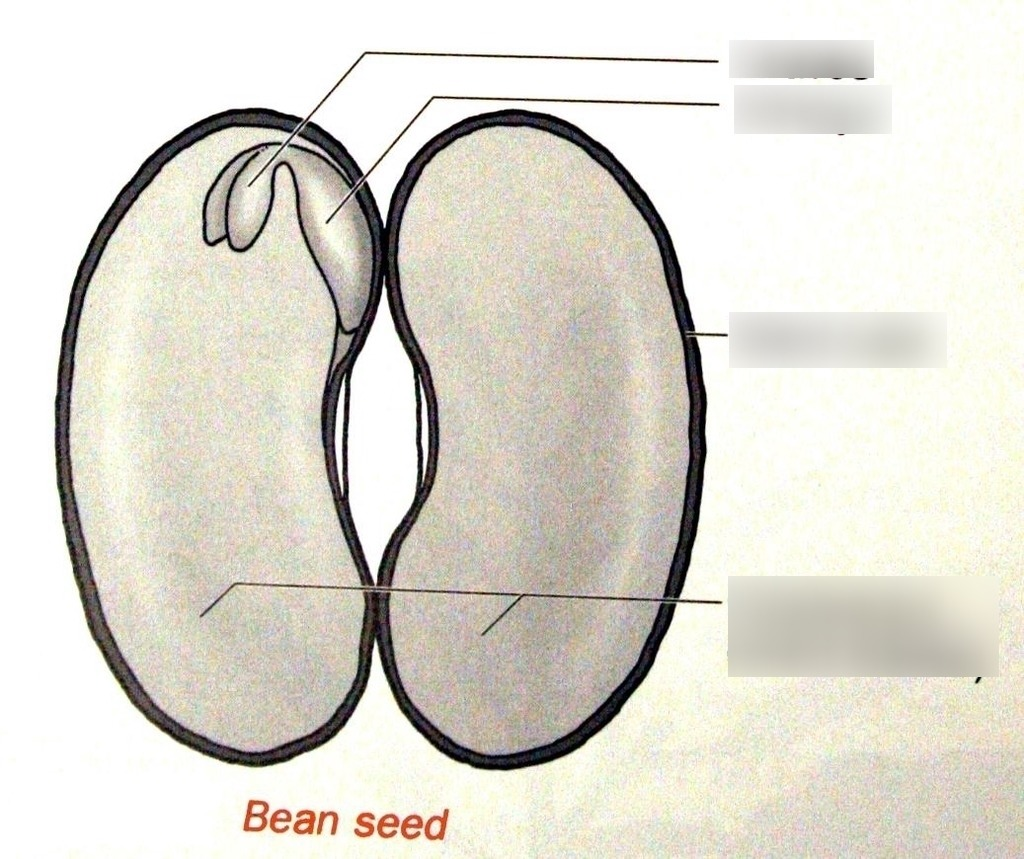 hight resolution of seed structures diagram 3rd grade