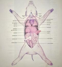 internal anatomy of the fetal pig figure 27 5 diagram quizlet fetal pig body diagram [ 985 x 1024 Pixel ]