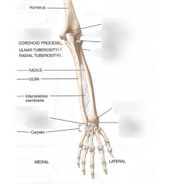 upper extremity bone diagram [ 791 x 1024 Pixel ]