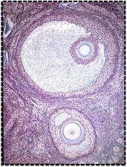 Endocrine system Flashcards   Quizlet