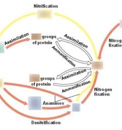 diagram showing the nitrogen cycle [ 1024 x 891 Pixel ]