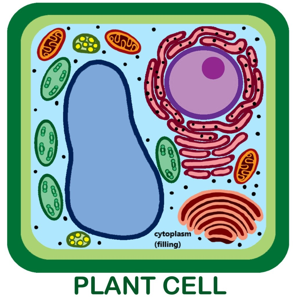 33 Label The Plant Cell