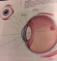 ap psych eye quiz [ 1024 x 768 Pixel ]