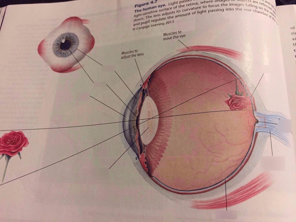 hight resolution of ap psych eye quiz