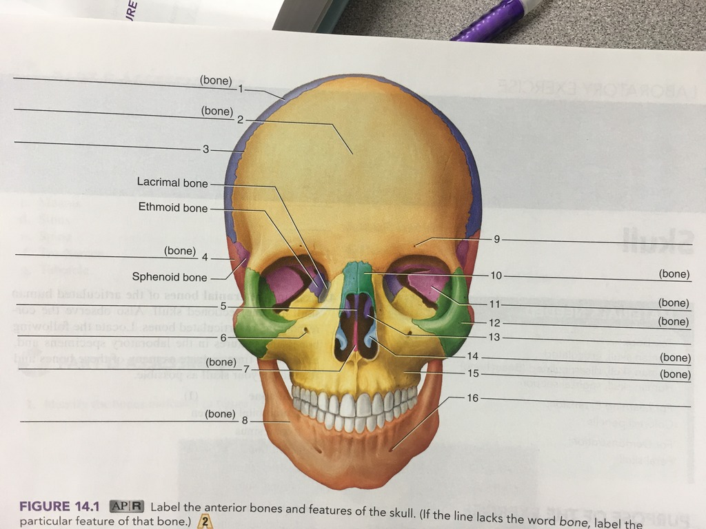 hight resolution of terms in this set 16 parietal bone
