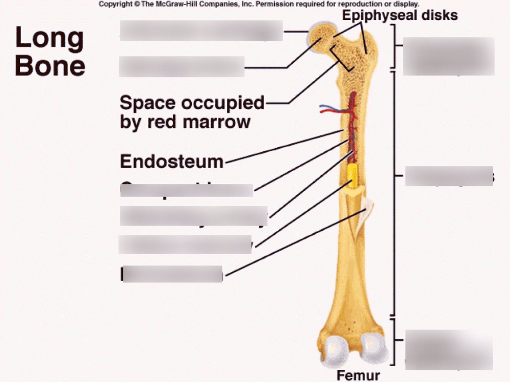 medium resolution of osseous tissue and bone structure diagram quizlet skeletal structure diagram bone structure diagram