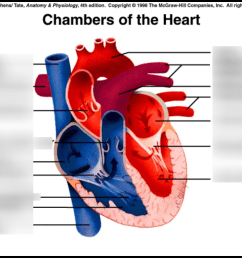 heart chambers labeling [ 1024 x 768 Pixel ]