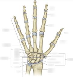 bone labeling diagram [ 1024 x 992 Pixel ]