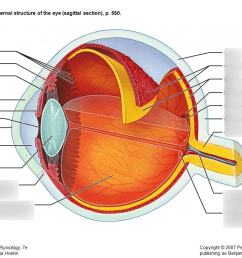 eye anatomy [ 1024 x 768 Pixel ]
