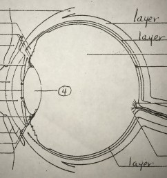 special senses eye diagram diagram quizlet eye diagram quizlet [ 1024 x 774 Pixel ]