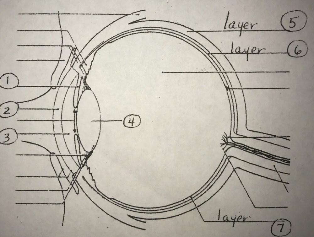 medium resolution of special senses eye diagram diagram quizlet eye diagram quizlet