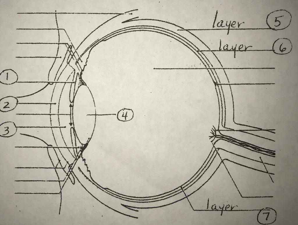 hight resolution of special senses eye diagram diagram quizlet eye diagram quizlet