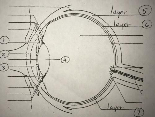 small resolution of special senses eye diagram diagram quizlet eye diagram quizlet