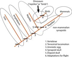 BIO: Mendelian genetics, evolution, population Flashcards