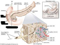 Digestive Anatomy Lab flashcards   Quizlet