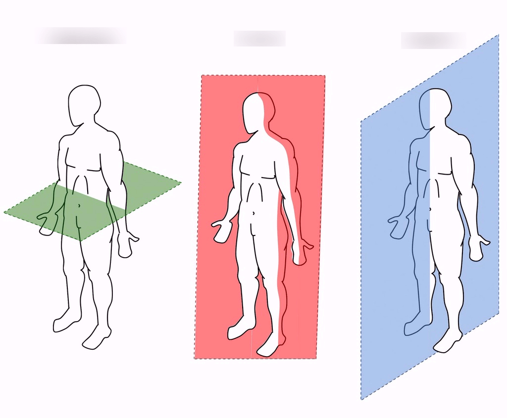 hight resolution of body planes diagram body planes diagram unlabeled