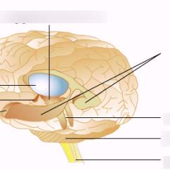 Lower Brain Diagram 240 Volt Ist Wieviel Watt Structure Quizlet Location