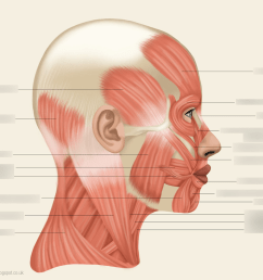 diagram of side of face wiring diagram blog diagram right side face [ 1024 x 910 Pixel ]