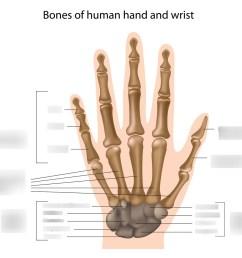 hcc coleman radr 1411 hand and wrist bone labeling quiz diagram quizlet [ 1024 x 952 Pixel ]