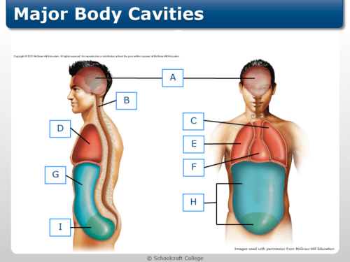 small resolution of terms in this set 9 abdominal cavity