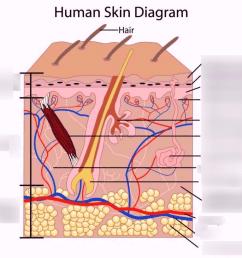 anatomy integumentary system [ 1024 x 818 Pixel ]