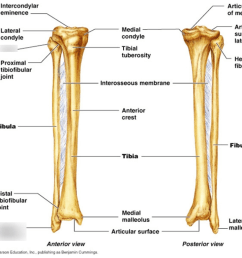 fibula diagram [ 1024 x 1024 Pixel ]