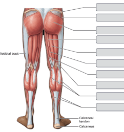 an overview of the major skeletal muscles posterior view part 2 [ 923 x 915 Pixel ]