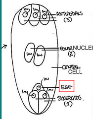 Insect Cell Diagram, Insect, Free Engine Image For User