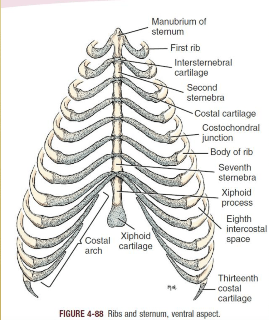 hight resolution of diagram part of sternum