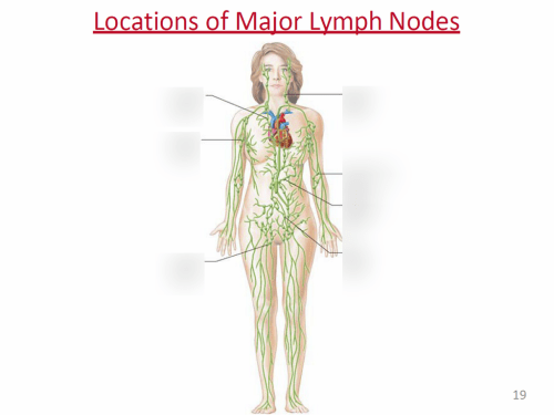 small resolution of terms in this set 7 thoracic lymph node