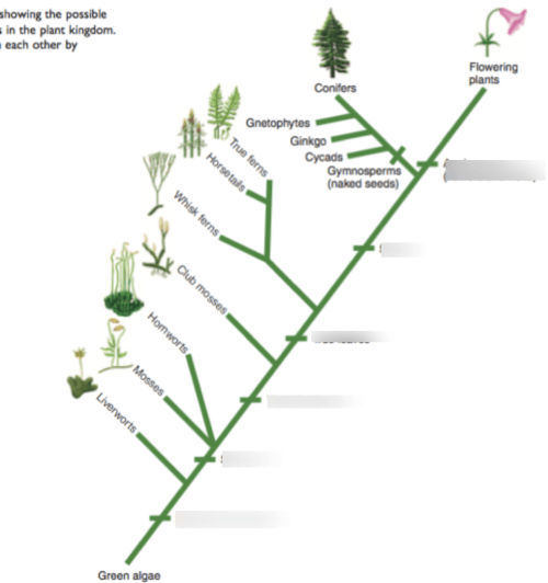 small resolution of phylogeny evolutionary changes