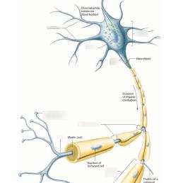 neuron diagram [ 803 x 1024 Pixel ]