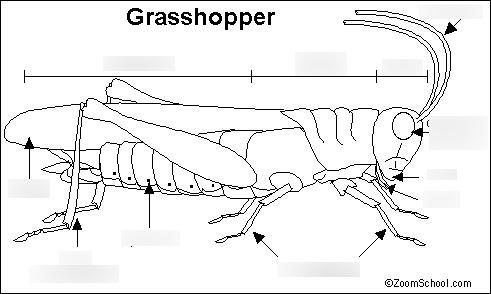 external grasshopper diagram honeywell thermostat wiring diagrams anatomy quizlet location