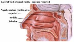 Nasal Cavity flashcards   Quizlet