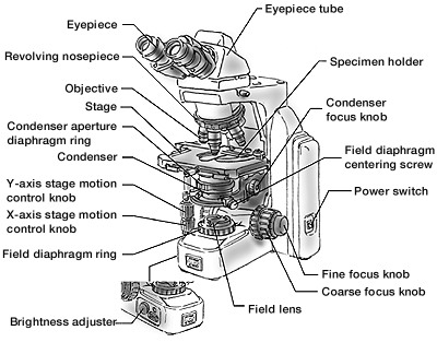 What Are The Differences Between Light Microscopes And