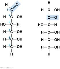 Monosaccharides (Carbohydrate monomer)