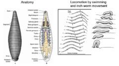 Biology 1215 lab 4: Invertebrate Animal Diversity
