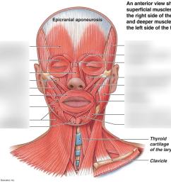 inside face diagram data diagram schematic inside of face diagram [ 1024 x 919 Pixel ]