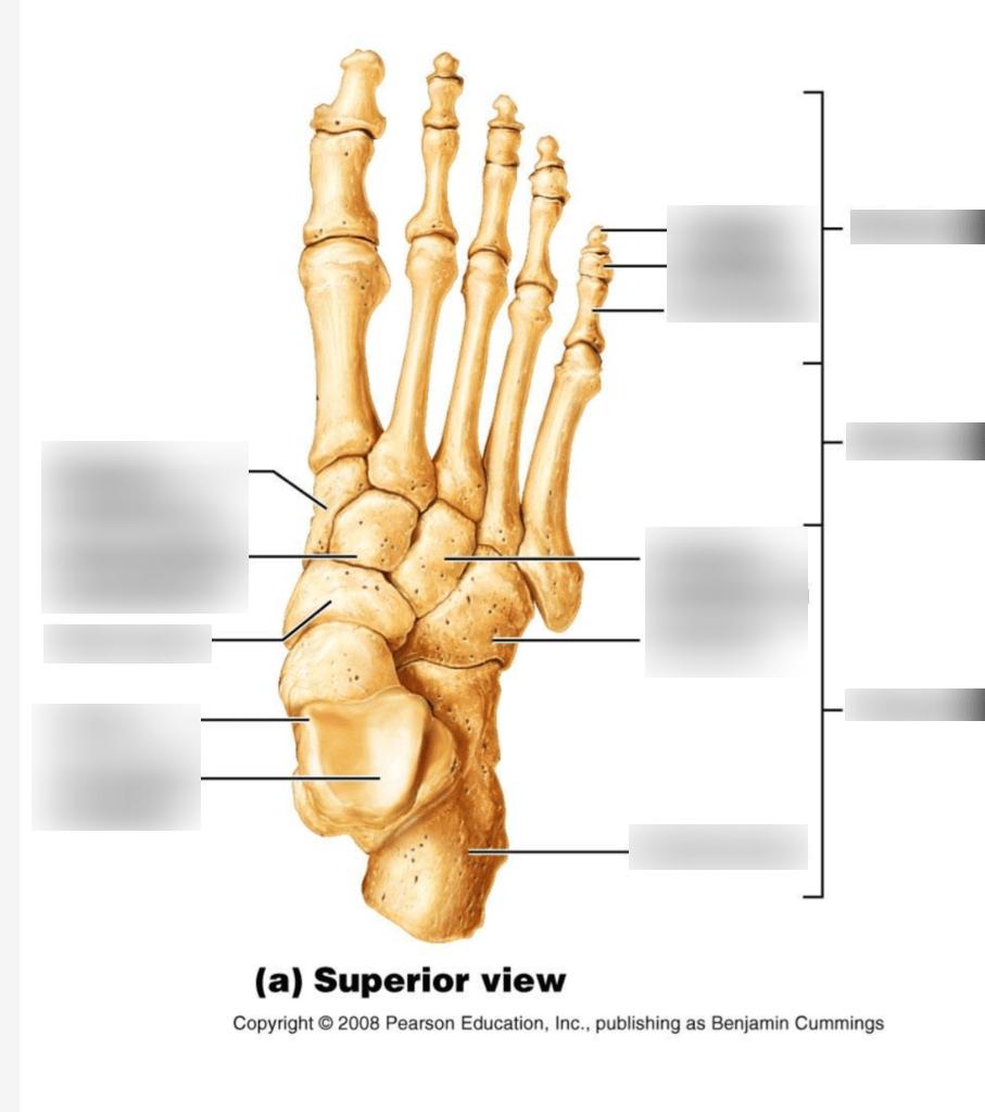 medium resolution of bones of the foot labeling