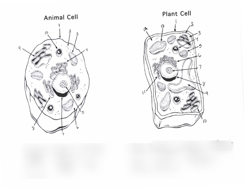 27 Diagram Of A Eukaryotic Cell