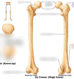 femur and patella [ 1024 x 768 Pixel ]
