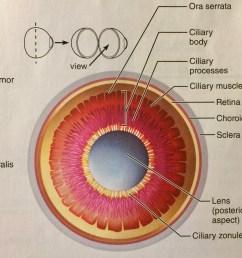 eye anatomy diagram [ 1024 x 988 Pixel ]