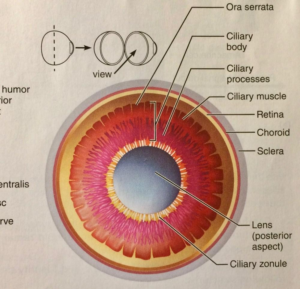 medium resolution of eye anatomy diagram