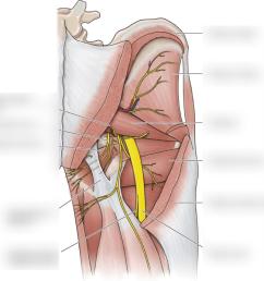 pelvis and perineum pt 1 [ 1024 x 995 Pixel ]